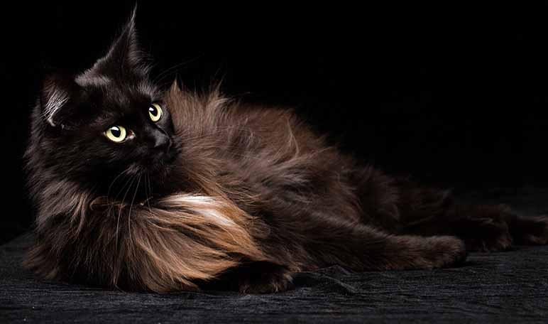 por-que-se-dice-que-los-gatos-negros-dan-mala-suerte-wikiduca