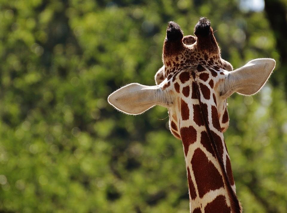 Los mejores zoológicos de España para un día con los niños