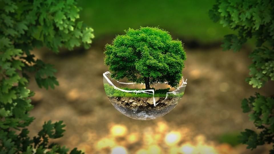 Aula Bio, un programa que difundirá los beneficios de la alimentación ecológica en las escuelas