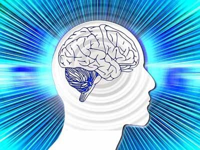 ¿Qué alimentos son buenos para el cerebro?